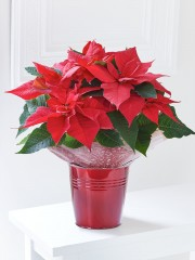 Festive Poinsettia Tin